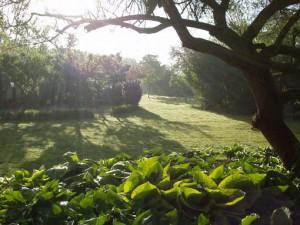 Tuin ochtendlicht